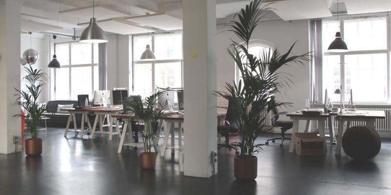 Planten op kantoor: tips voor een inspirerende werkomgeving